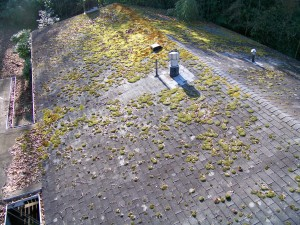Roof Cleaning Northern Virginia Moss