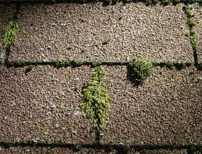 Roof Moss and Lichen treatment by American-ProTech